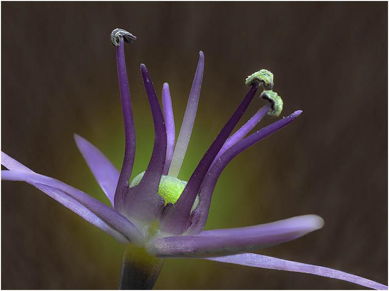 Blume, Makro