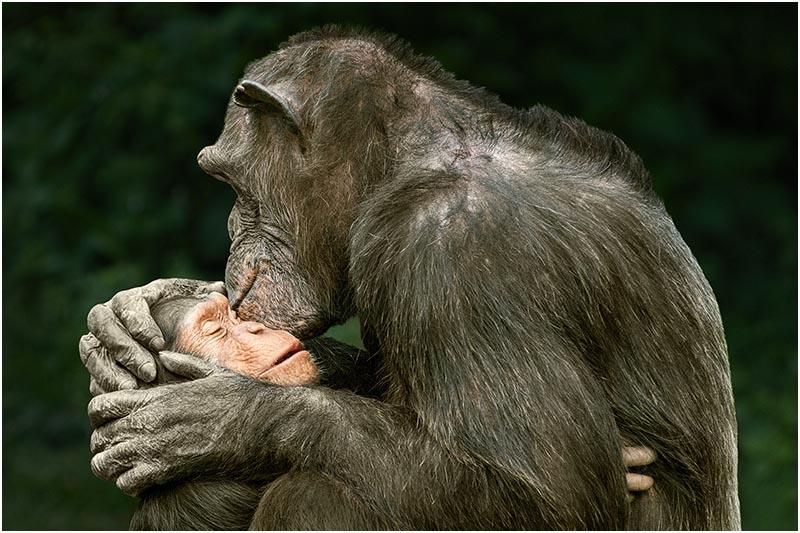 Affe mit Schützling