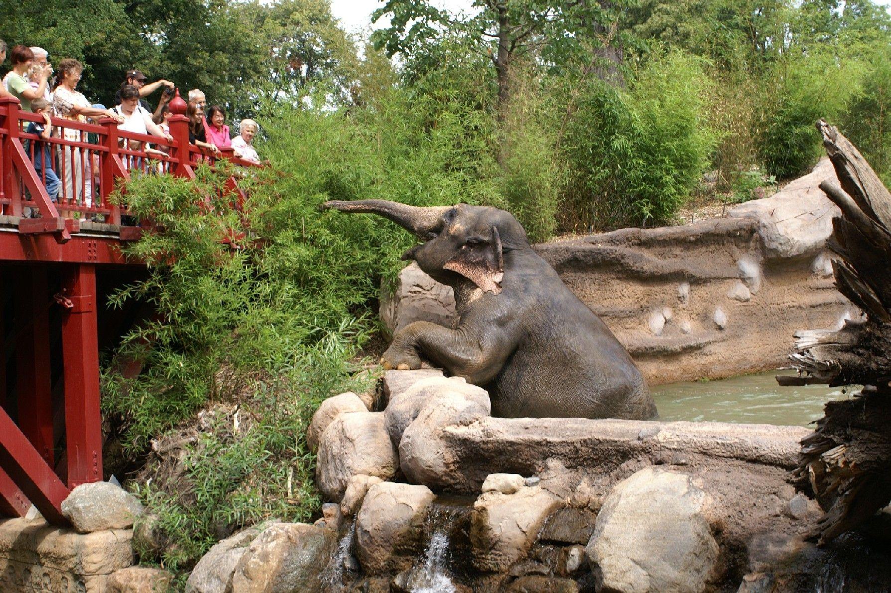 Elefantentempel Ganesha Mandir