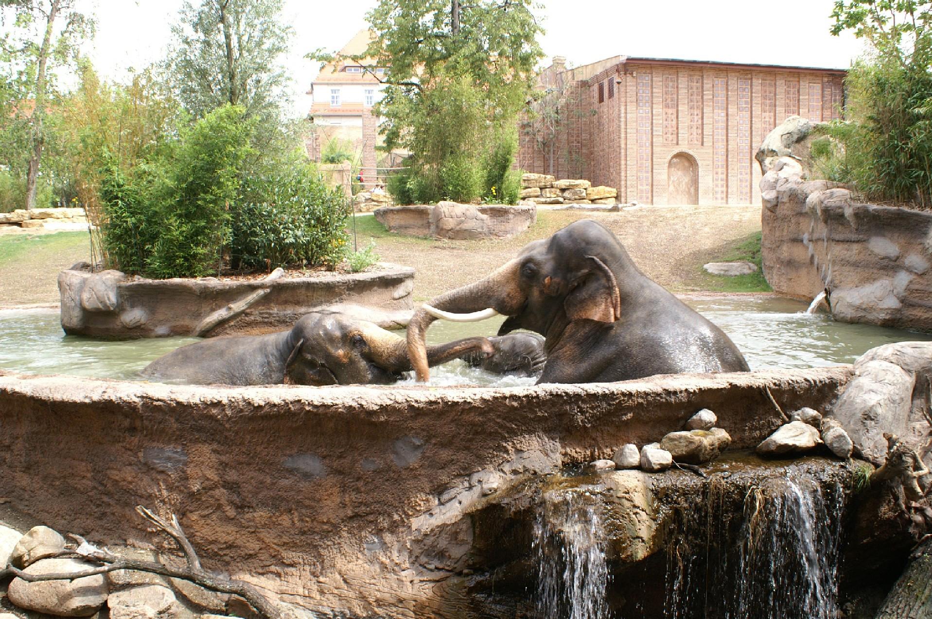Badespaß für Elefanten