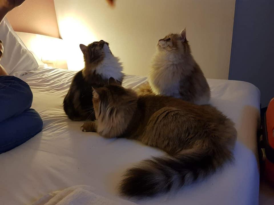 Osmone, Orore & Mey se détendent à l'hôtel