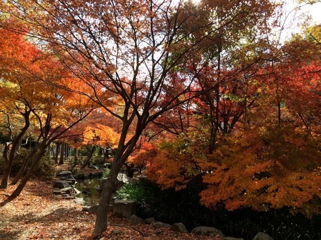 平清盛の八条亭跡地の紅葉