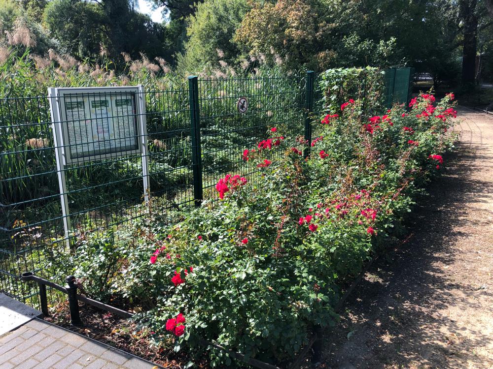 2019-09-14 Rosenbeet am Teich