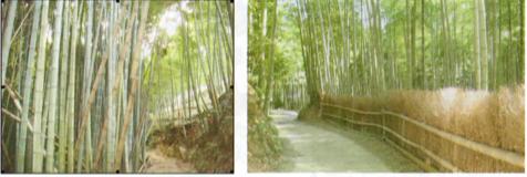 放置竹林(左) 竹垣の完成(右)