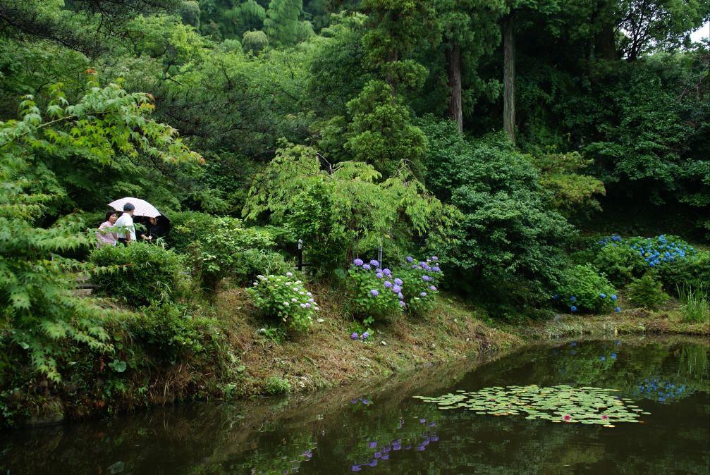 二日市・武蔵寺の紫陽花(福岡)