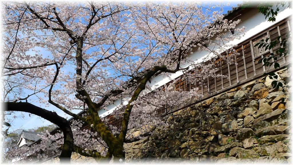 福岡城跡①