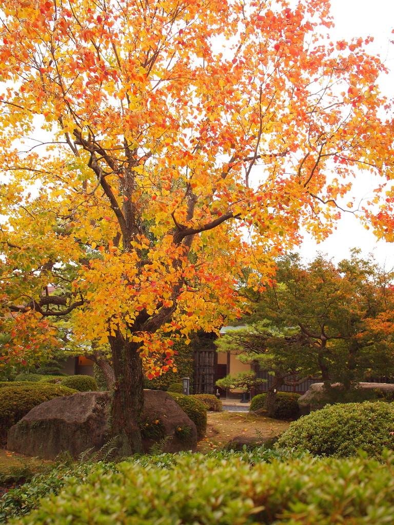 日本庭園1(福岡県福岡市)