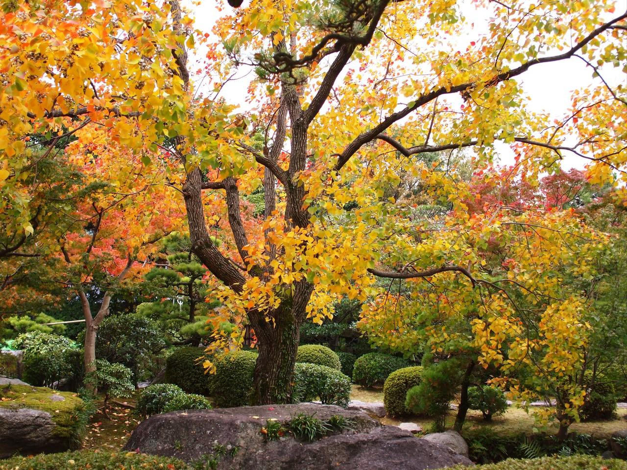 日本庭園2(福岡県福岡市)