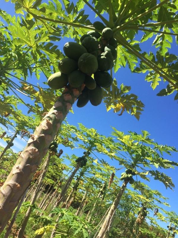 フルーツと野菜の収穫