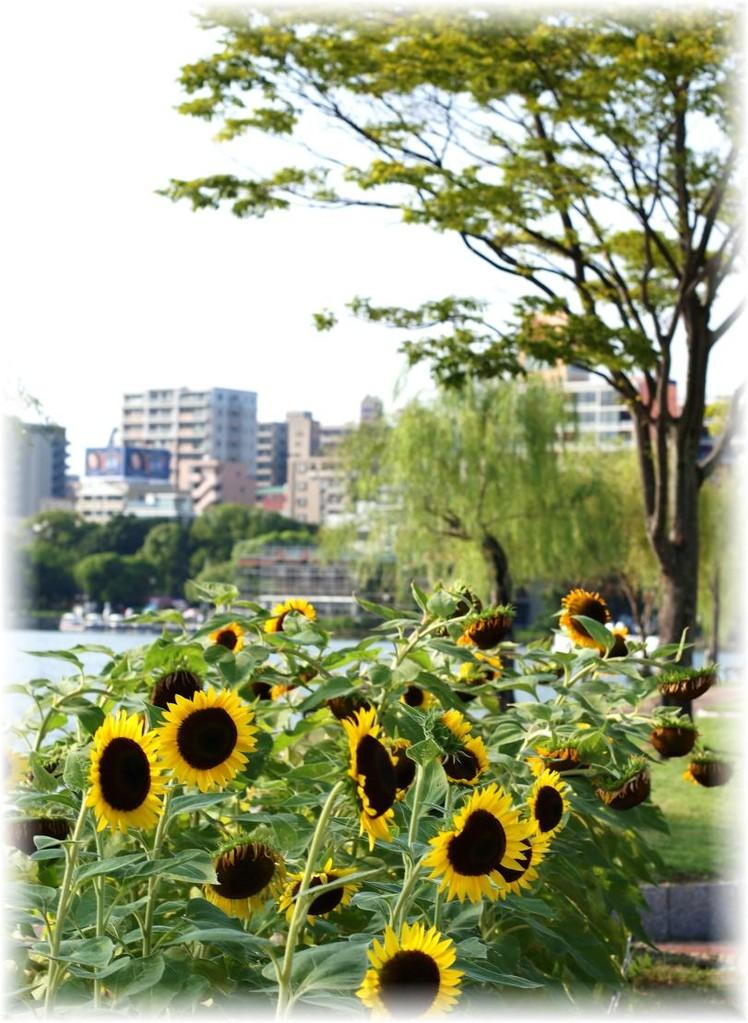 大濠公園(福岡県福岡市)