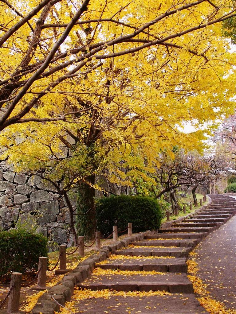 福岡城跡(福岡県福岡市)