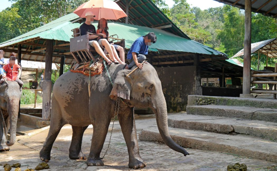 Tourists riding an elephant at a zoo in Thailand
