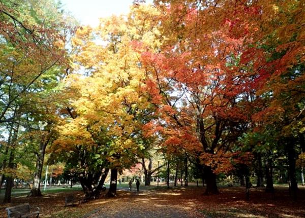 Maruyama hike autumn