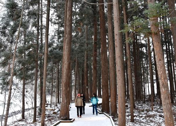 Maruyama hike winter