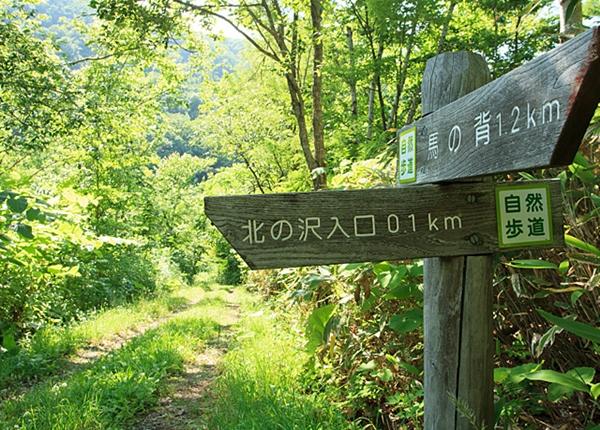 Maruyama hike summer