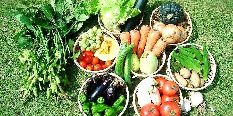 地元の新鮮野菜・無農薬野菜など多数販売しています。