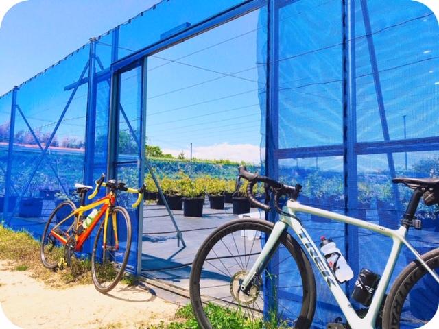 サイクリングxブルーベリー