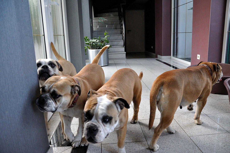 Kiekt mal Emmchen passt auch noch zwischen Wand und Hund