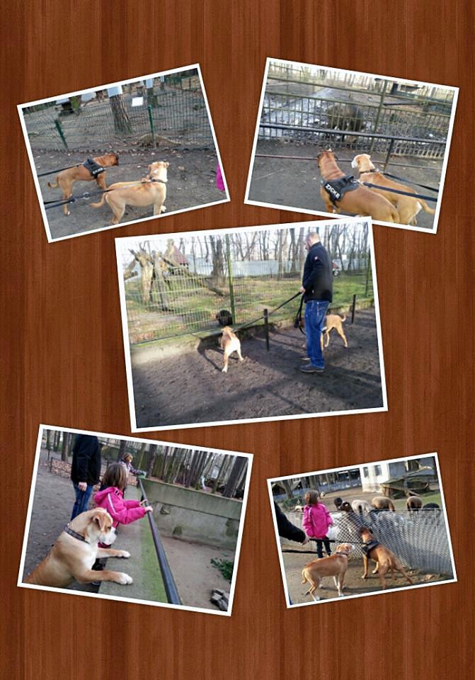 Alf im Tierpark