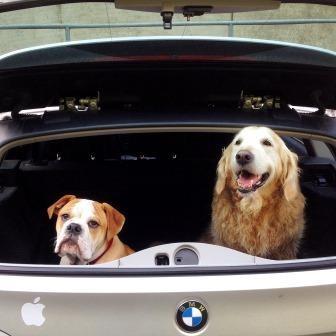 Continental Bulldog und Auto