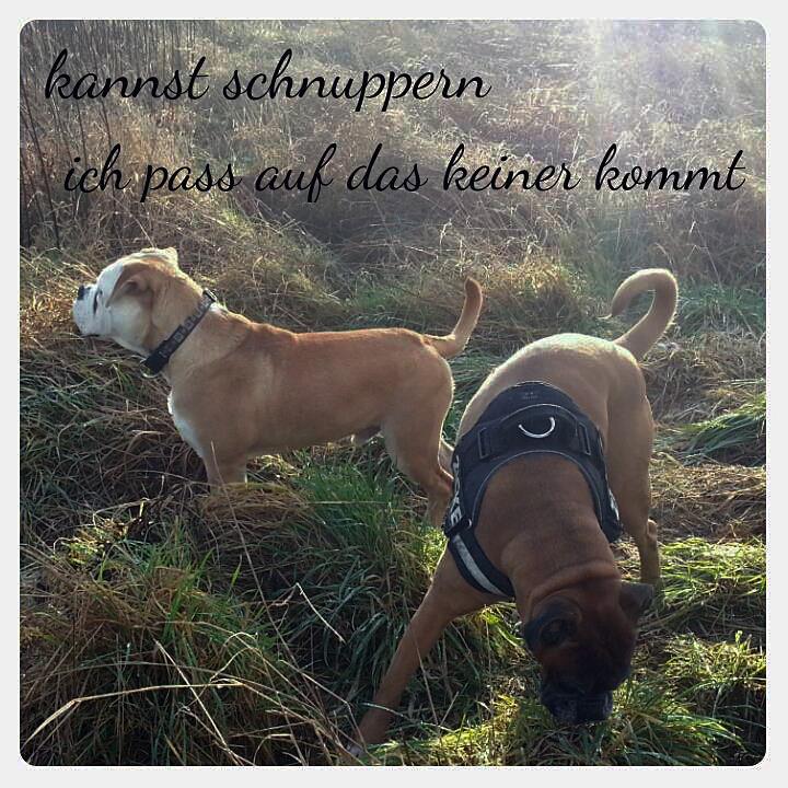 Alf und seine Hundelady