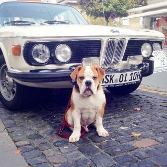 Continental Bulldog und BMW