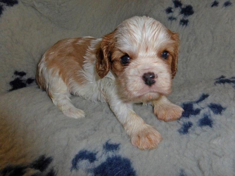 Timbo, vier Wochen alt