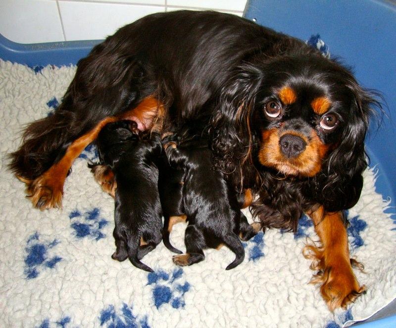 Ginny und ihre Babys