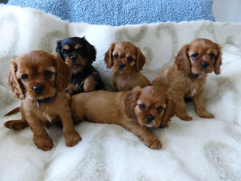 Salvi, Sheila, Stella, Siro und Shelbi