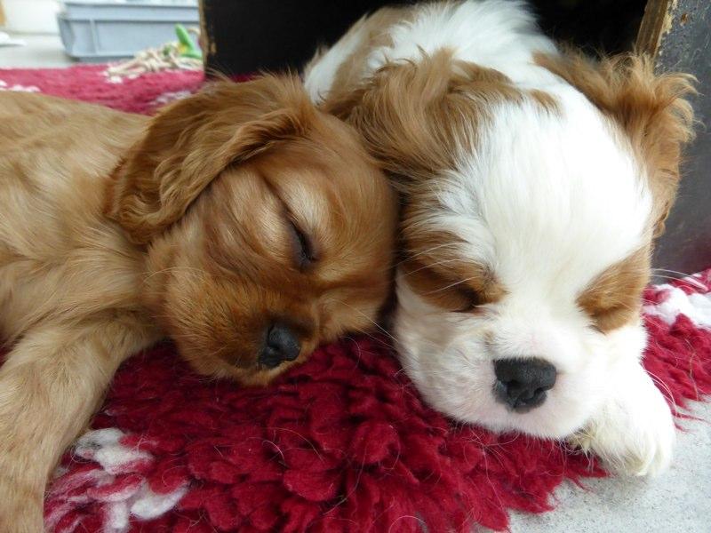 Polly und Oakley