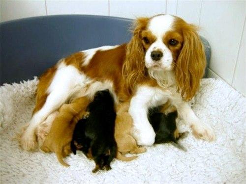 Tosca mit ihren Babys!