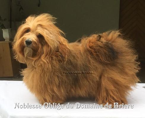 Noblesse-Oblige du Domaine de Brière