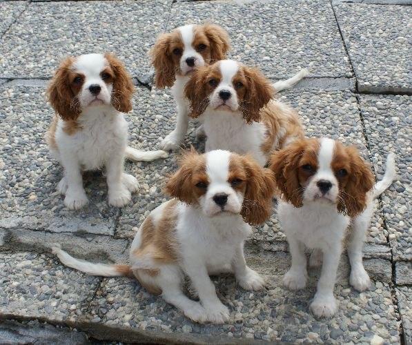 Keira und ihre Geschwister mit 12 Wochen!