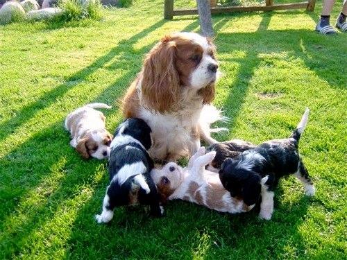 Kiowa ist eine geduldige Mama.