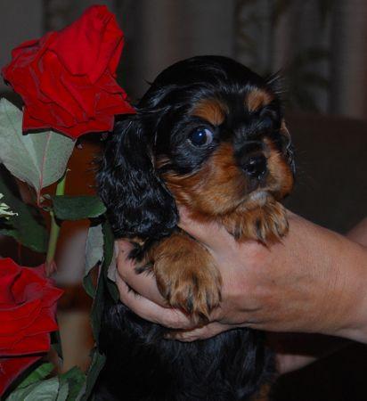Ginny, 6 Wochen alt