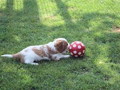 Ein grosser Ball!