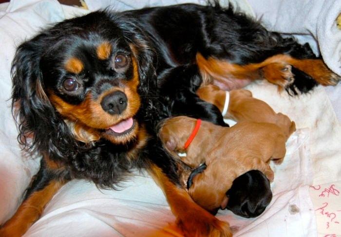 Mama Joy und ihr fünffacher Nachwuchs!