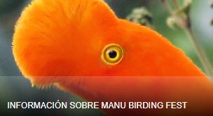 Manu Birding Fest. La Birdfair andina