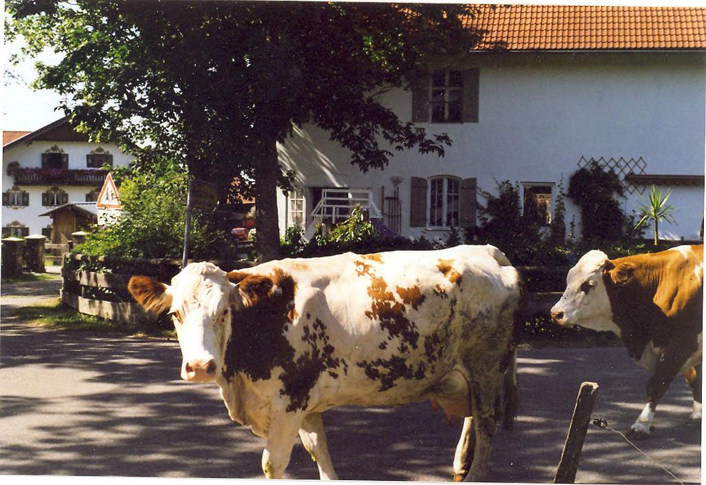 Auf der Dorfstraße