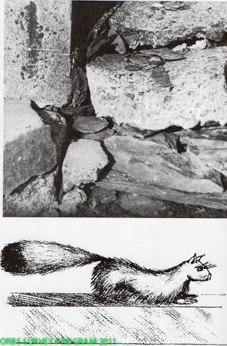 Sur la première photographie le passage employé par la mangouste pour sortir de la maison du fermier. Cet animal pouvait, semble-t-il, chanter et réciter des poèmes.   Le dessin représente Gef, la mangouste douée de la parole, dessinée d'après témoins