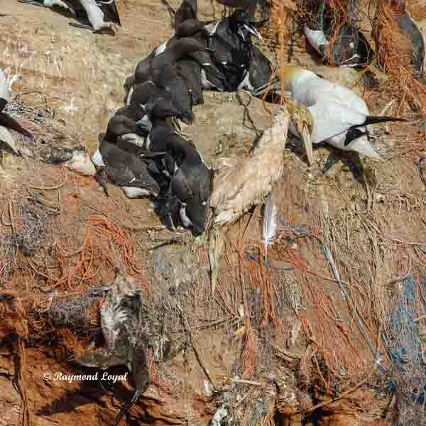 seabird killer fishing net