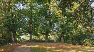 linn castle landscape garden