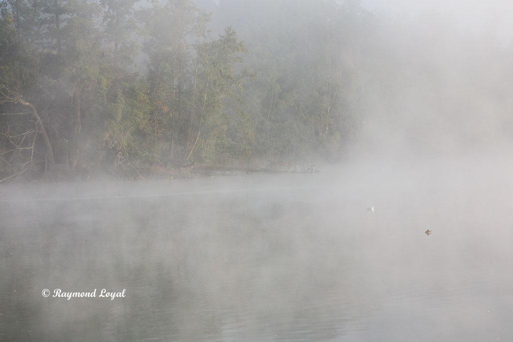 morning mist lake