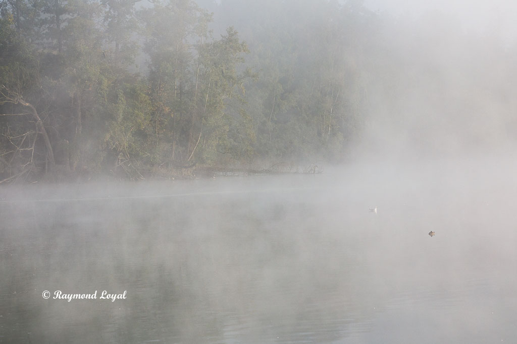 morning mist lake