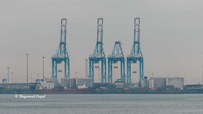 container bridges zeebrugge