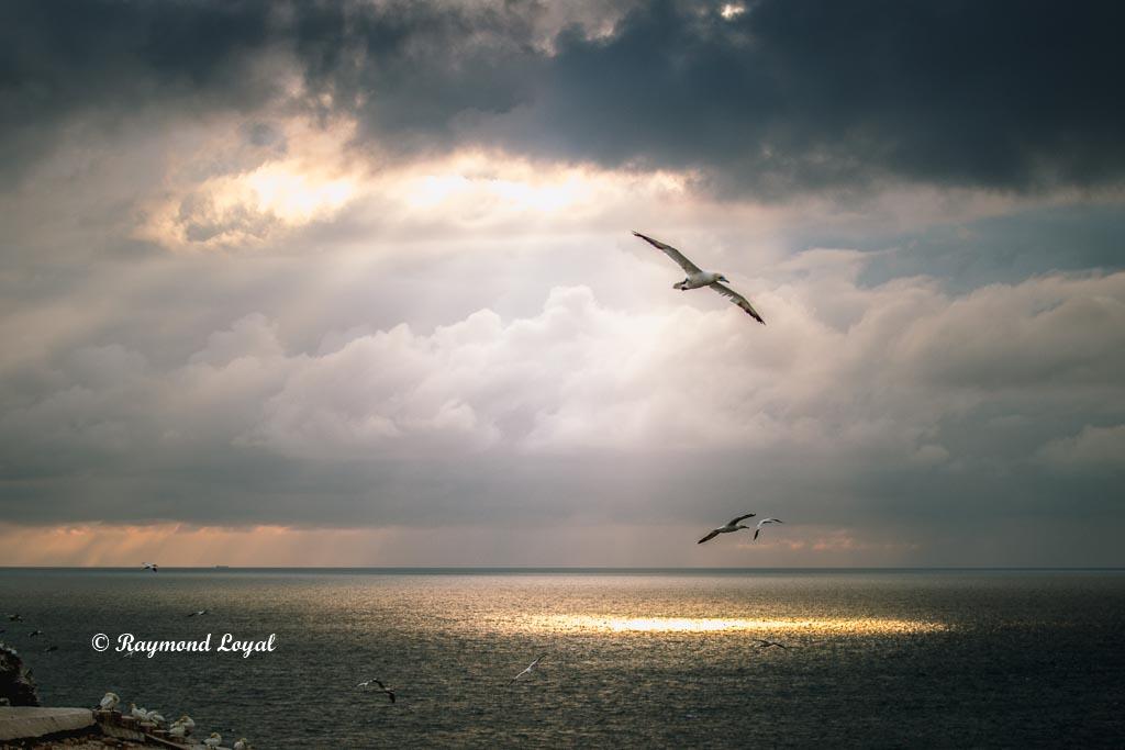 helgoland natur foto wolken basstoelpel
