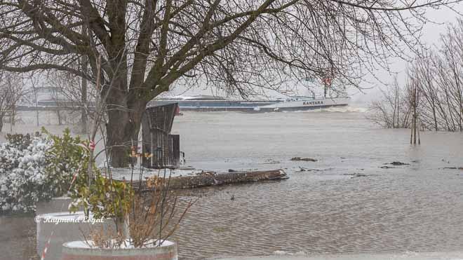 fluss rhein hochwasser landschaft wasser schiff