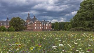 schloss wasserburg anholt wildblumenwiese