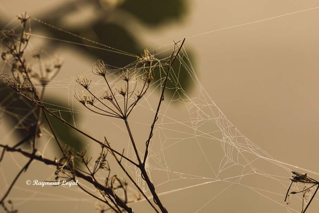 nebel licht spinnennetz