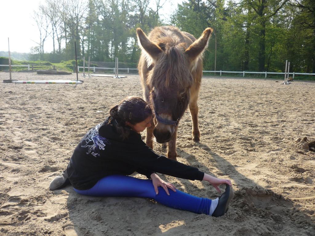 ...der Esel wollte Aileen essen...